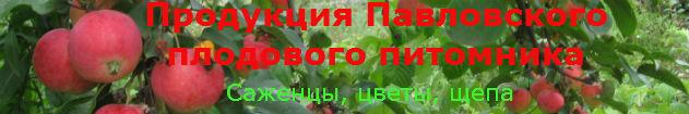 Интернет-магазин Павловский плодовый питомник