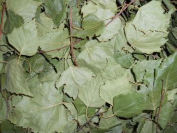 Листья березы сушёные, 50 г