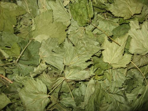 купить листья смородины
